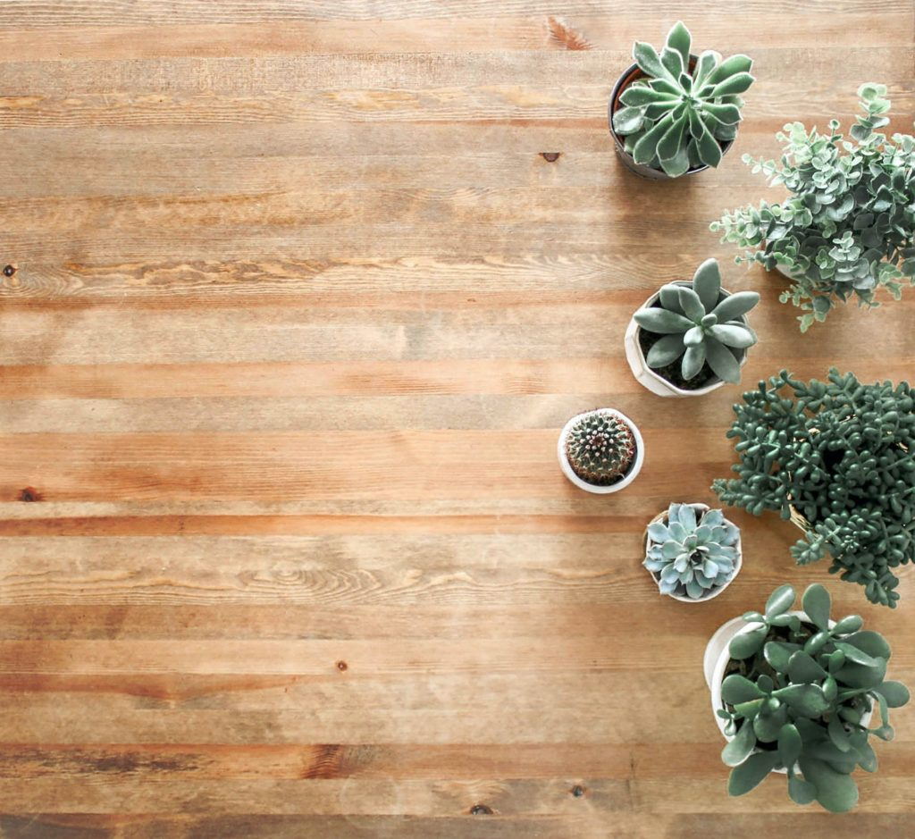 above ground photo of succulent plants on brown wooden board 1470168